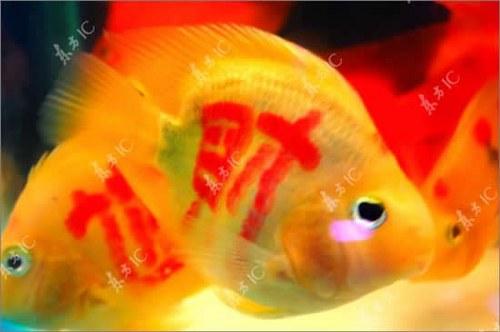 peces-tatuados-1_500x332